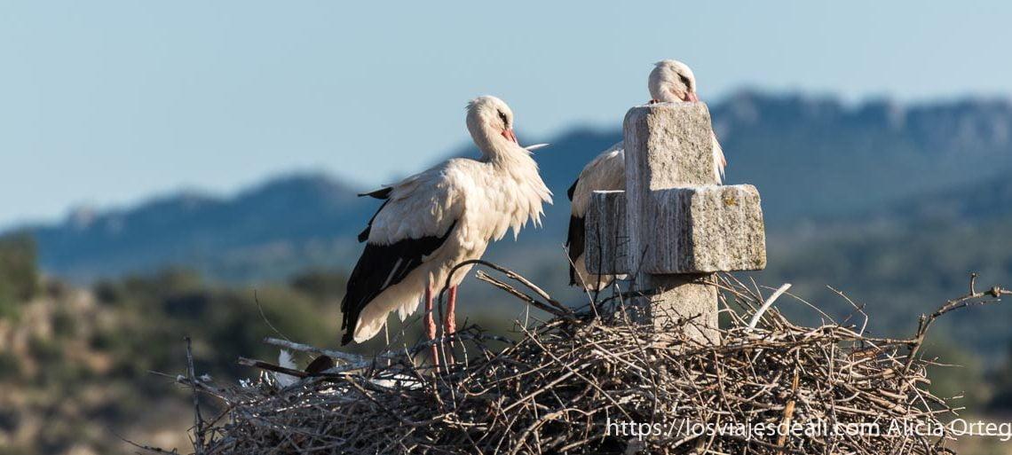 dos cigüeñas en su nido junto a una cruz de piedra de la iglesia de valencia de alcántara escapada a cáceres