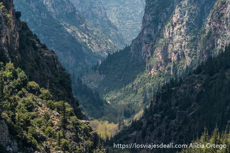 valle profundo lleno de bosques con partes iluminadas por el sol y otras en sombra por las nubes