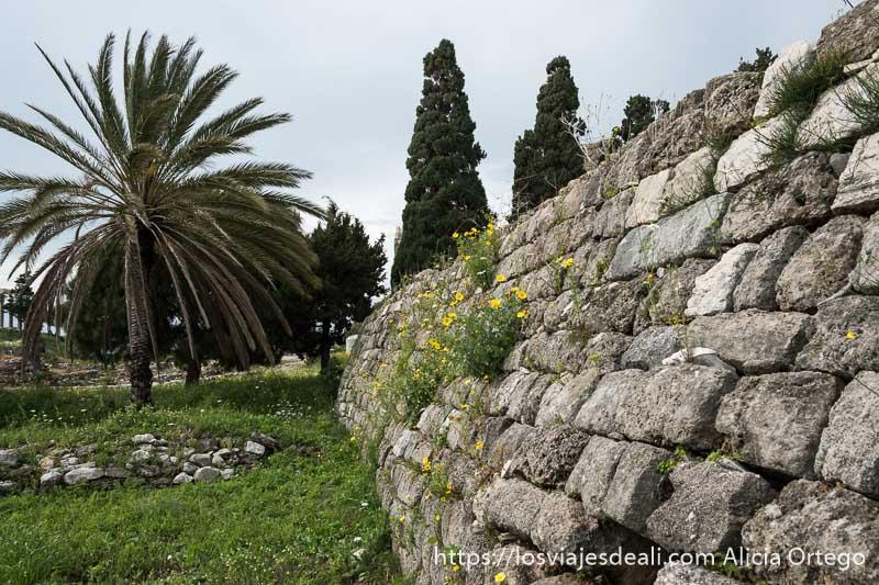 muralla con flores amarillas una palmera al lado y dos cipreses al fondo en la ciudad antigua de byblos