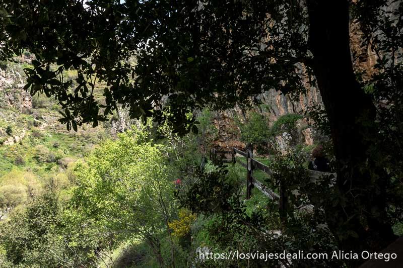 camino en el valle con gran árbol dando sombra en las montañas de líbano