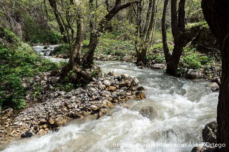 torrente de agua haciendo curva con bosque alrededor y orillas de cantos rodados