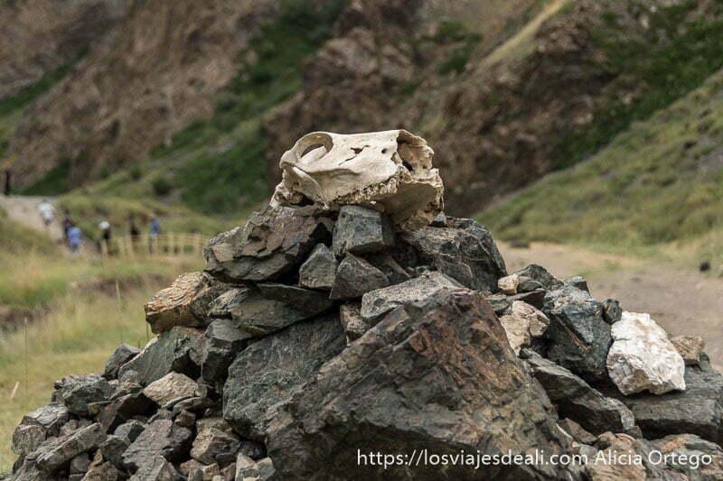 montón de rocas con una calavera de animal encima en el desierto del gobi