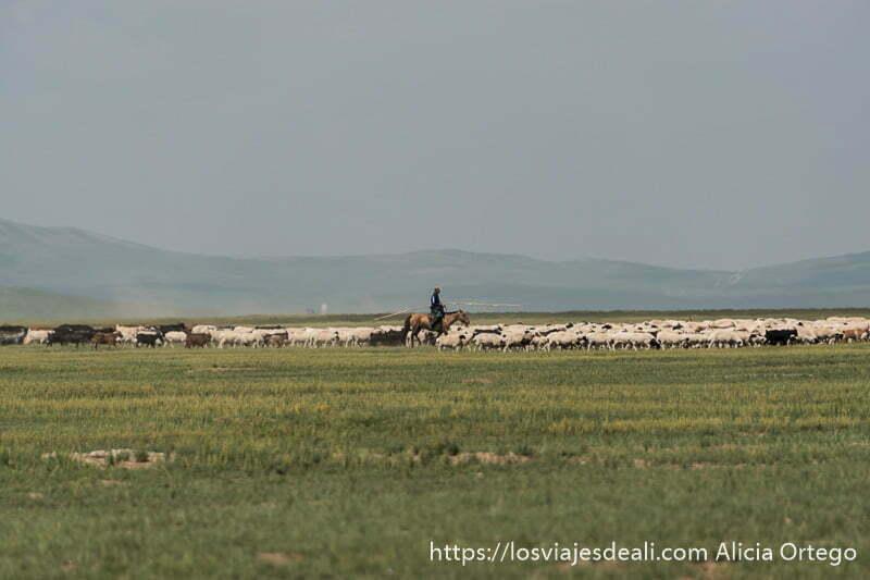 pastor a caballo con palo muy largo guiando a sus ovejas