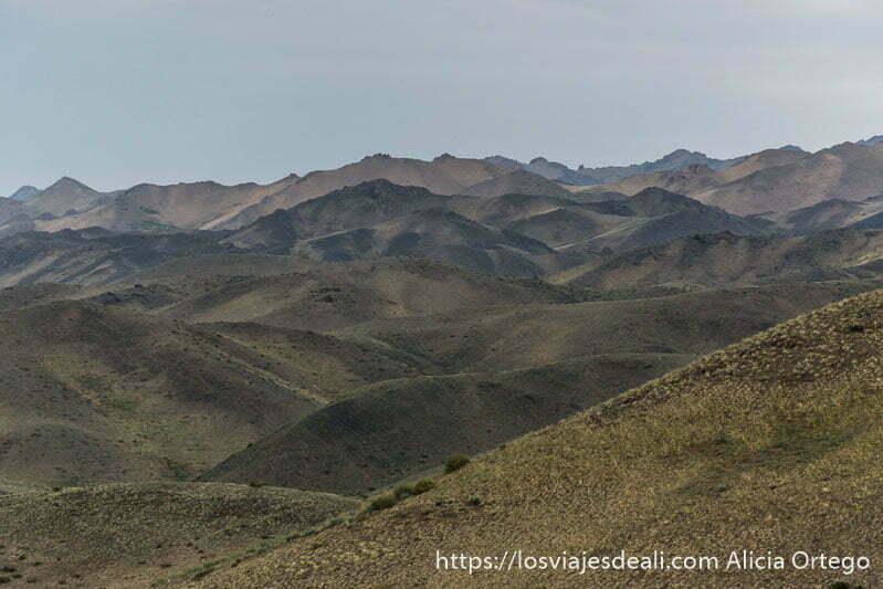 paisaje de montañas cubiertas de pequeños matorrales en el desierto del gobi