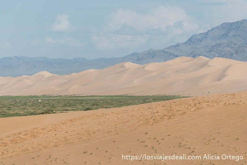 dunas del desierto del gobi haciendo curva con montañas detrás y hierba verde a sus pies