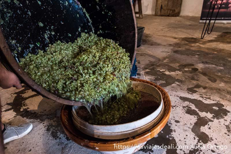 volcando cuba llena de uvas en cacharro de barro en la experiencia en la vendimia
