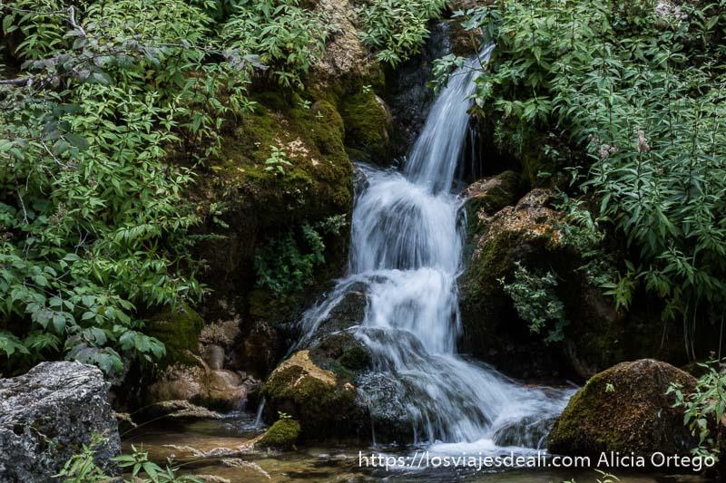 cascada entre vegetación verde en el nacimiento del río mundo