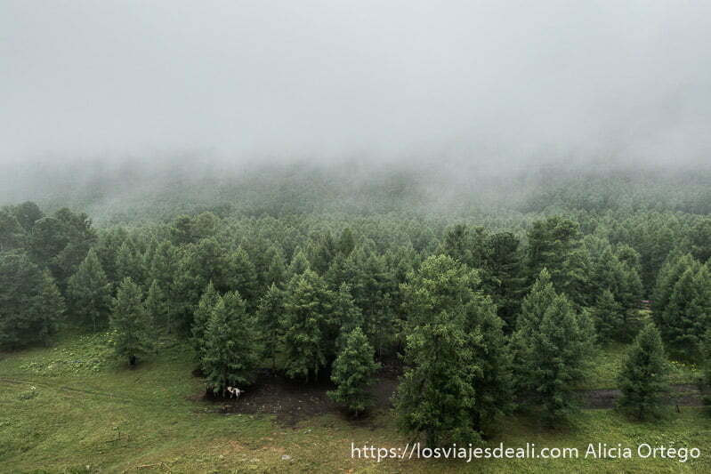 paisaje de bosque de alerces con niebla en el valle de orkhon
