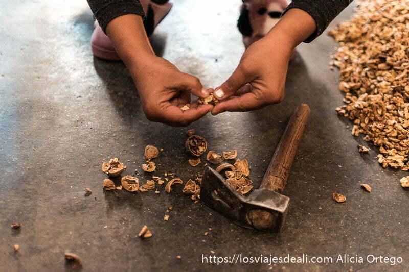 manos abriendo una nuez con martillo al lado en el suelo y parte del montón de nueces peladas a un lado