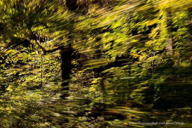 árboles con hojas amarillentas en movimiento pasando con el coche