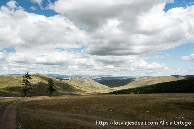 pista de coches haciendo curva con horizonte lleno de montañas ondulantes y dos pinos a la izquierda en un lugar de mongolia