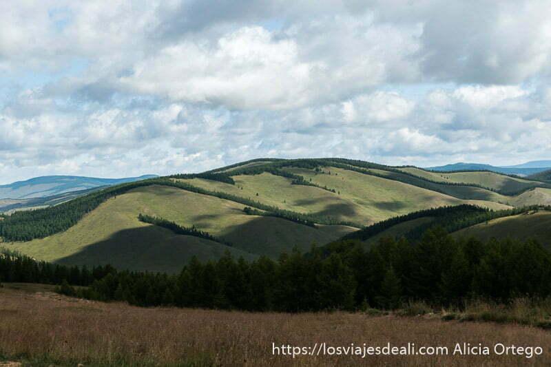 montañas de color verde con hileras de pinos y cielo lleno de nubes en un lugar de mongolia