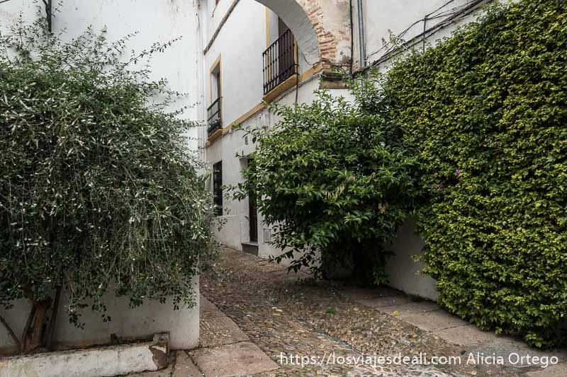 callejón sin salida con paredes llenas de plantas trepadoras
