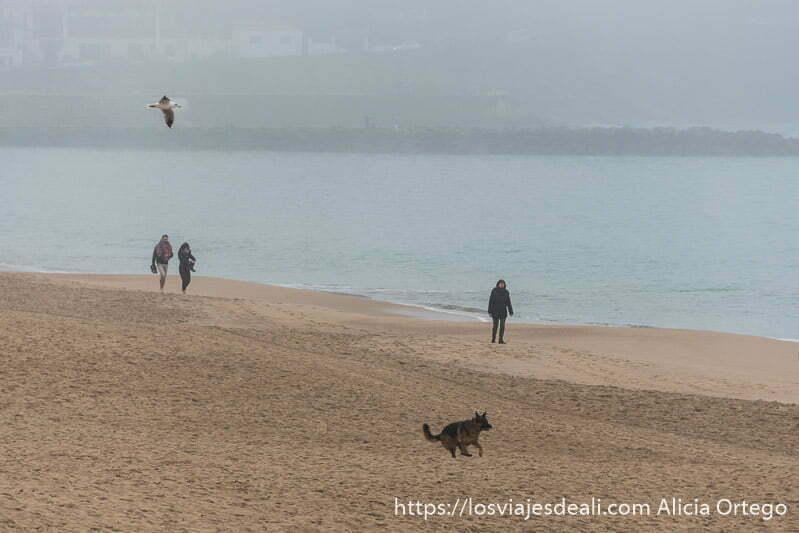 tres personas en la playa con un pastor alemán corriendo por la arena y una gaviota volando sobre ellos en la excursión a san juan de luz y biarritz