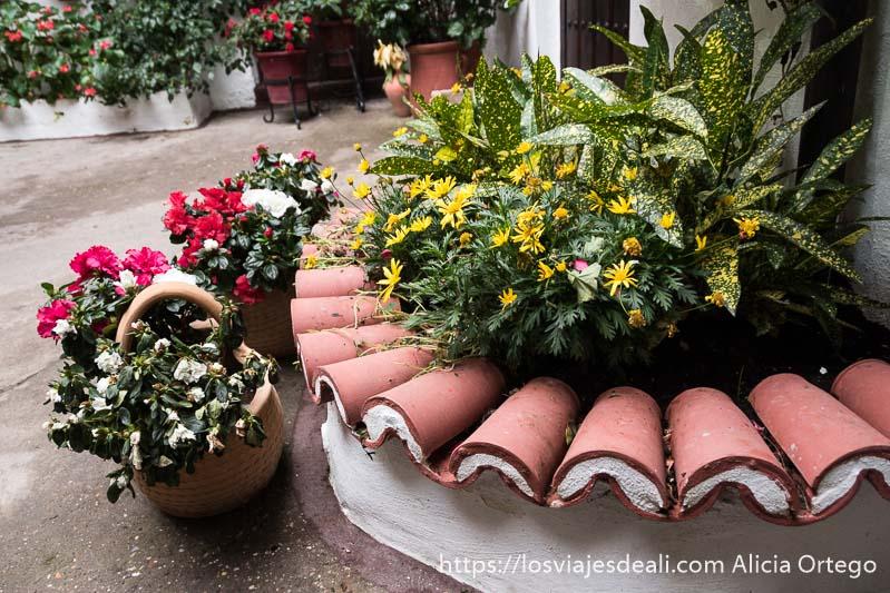 macetas y arriates de flores y plantas en uno de los patios de córdoba