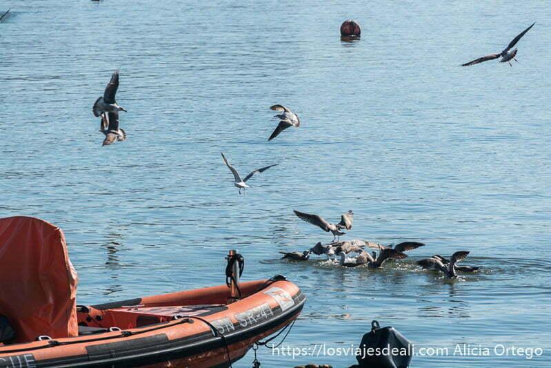 gaviotas arremolinándose en el agua porque tendrán algo que comer y la proa de una barca naranja