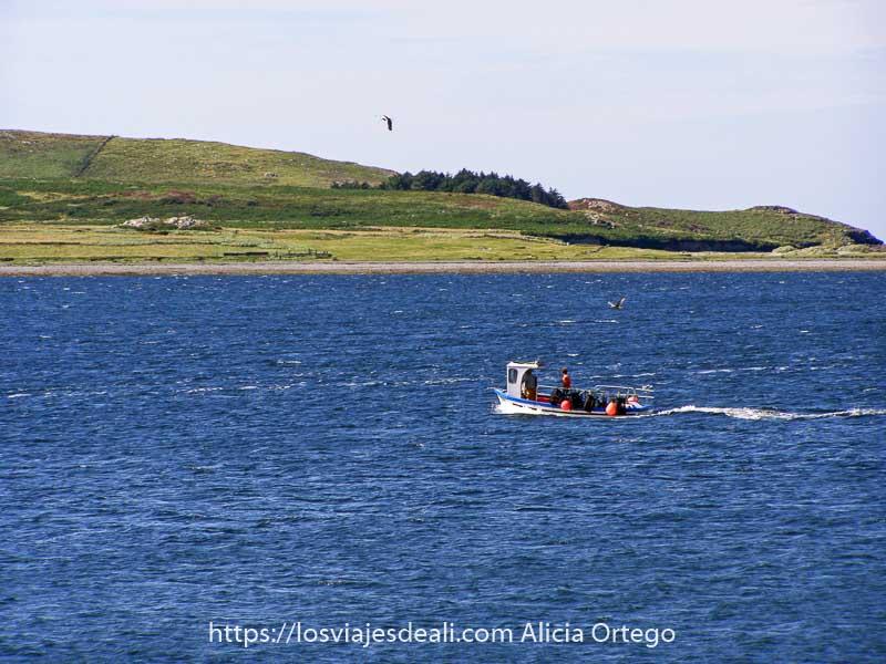 barquito de pesca surcando el agua con isla verde al fondo y una gaviota en el aire en el ring of kerry