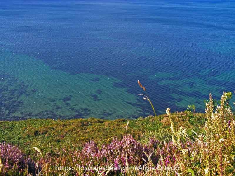 flores silvestres en parte baja de la foto y el resto agua de mar con distintos colores desde turquesa a azul profundo