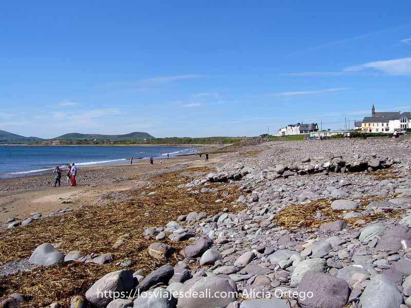 playa de rocas con muchas algas en Waterville para obligada de Ring of Kerry