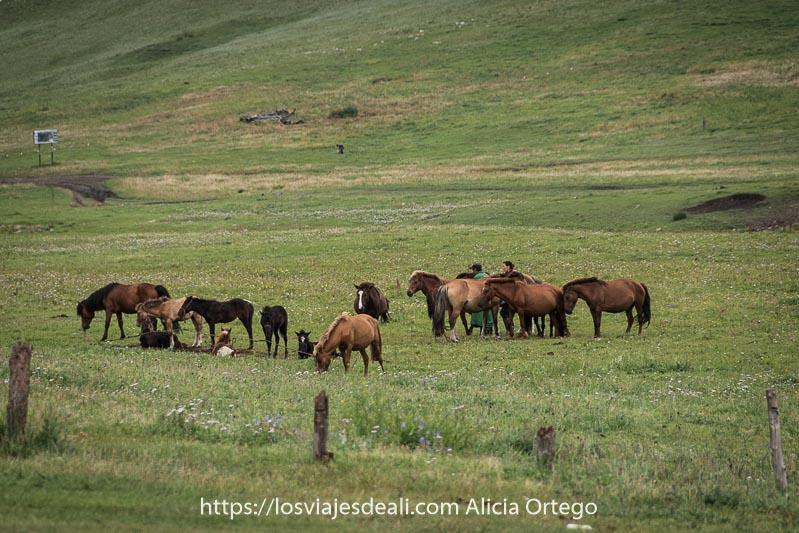 grupo de caballos atados y una pareja entre ellos en medio de un prado fauna de mongolia