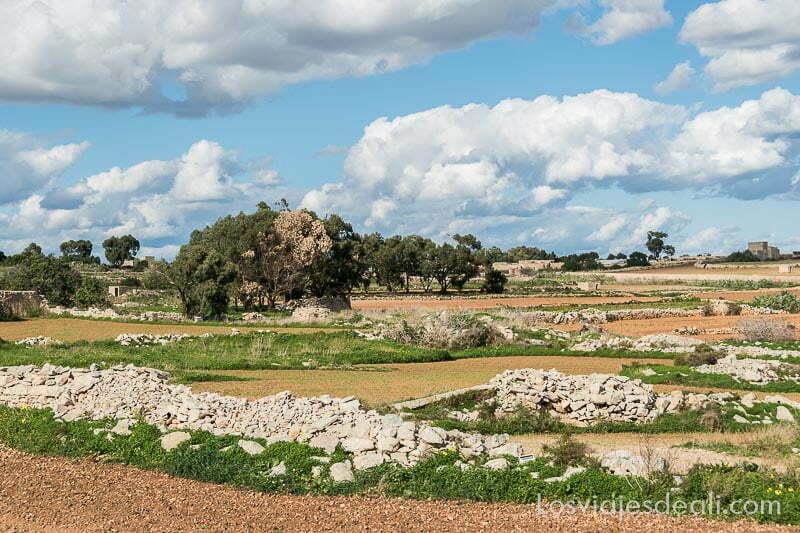 campos de malta con vallas de piedra