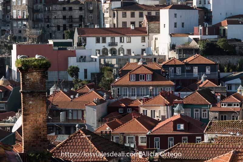 vista de tejados y a la izquierda una chimenea de ladrillo con dos gaviotas anidadas en la parte superior lugares que ver en oporto